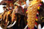Postcard of elephants at the festival in Cochin
