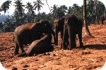 Elephants at the Orphanage